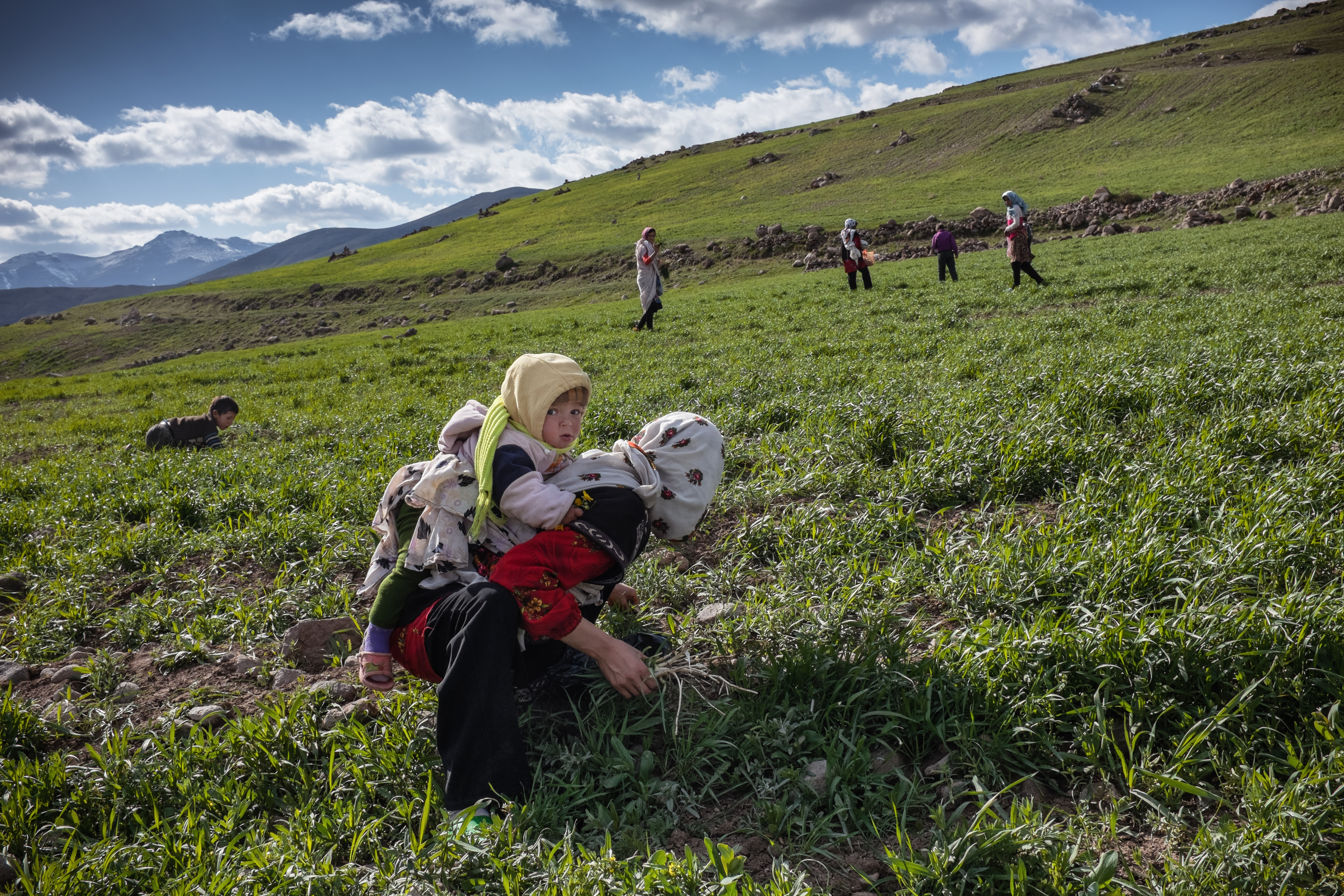 Roghayyeh with her nephew on her back while picking herbs in the fields outside the village. Ajabshir, East Azerbaijan, Iran.